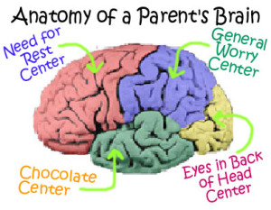 anatomy parent's brain