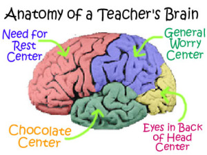 anatomy teacher's brain labeled